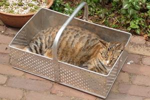 080618 Mara kat in het bakkie