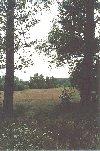 Haanwijk kampenlandschap