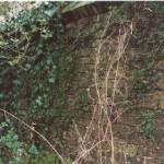 Haanwijk muur