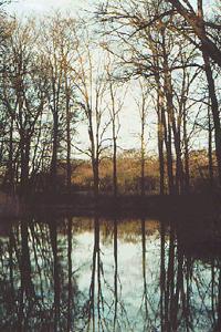 020202 Wamberg kale bomen boven water