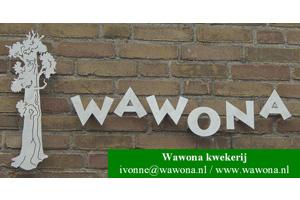 Wawona-kwekerij-logo-en-gegevens