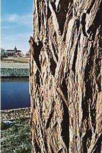 Foto van boomschors