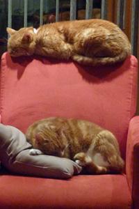 Tinus en Rosso rusten uit van drukke nacht 150101