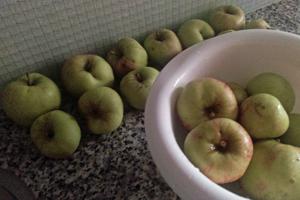 Wawonatuin appelen 150901 | moestuin