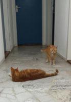 Rosso en Tinus