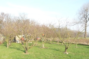 Kersenboomgaard Holtum