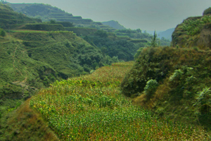 Groen Goud groen Chinees landschap
