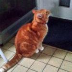 Kat Tinus bij kattenluikje overburen