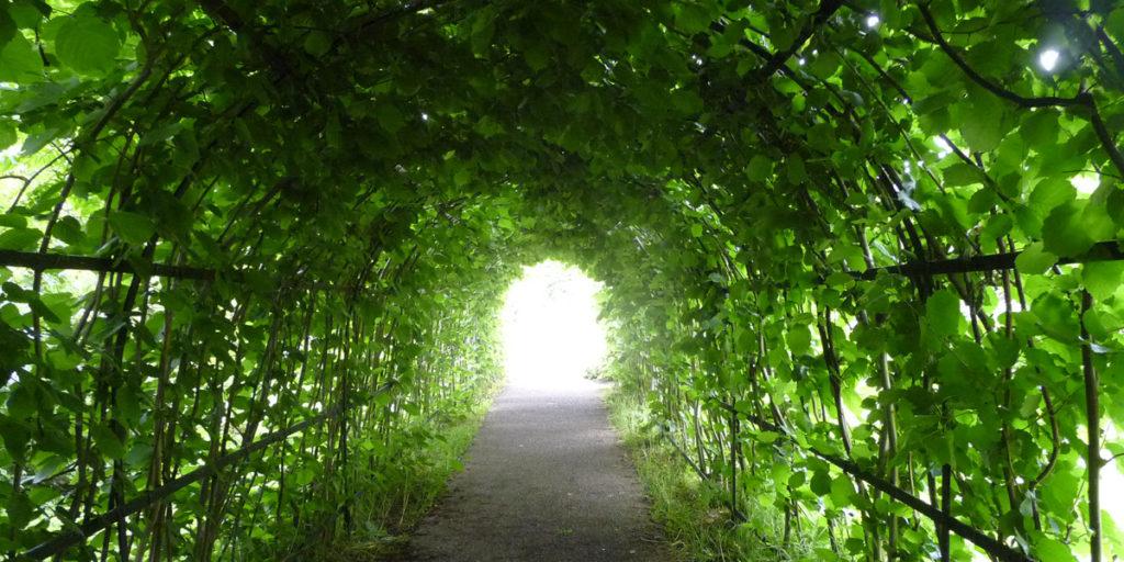 180617 Winterbourne Gardens (17) Notenboog