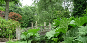 180617 Winterbourne Gardens (25) Brug en Gunnera in de kloof