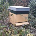 Bijenvlok in de Wawona-tuin